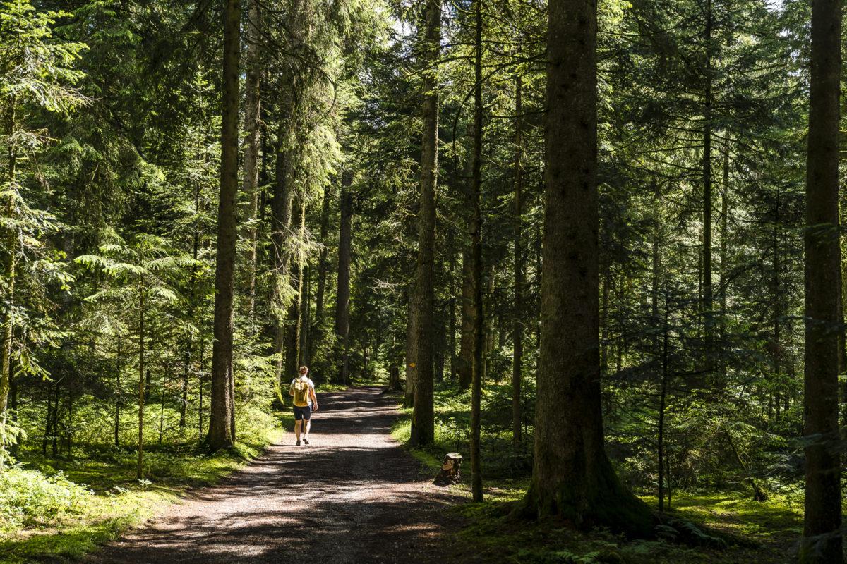 Wanderung Chuderhüsi - Röthenbach
