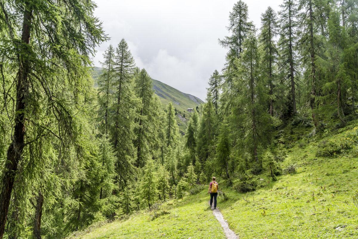 Walserweg Arosa - Sapün