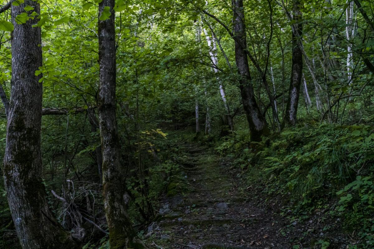 Wald im Cairasaca-Tal