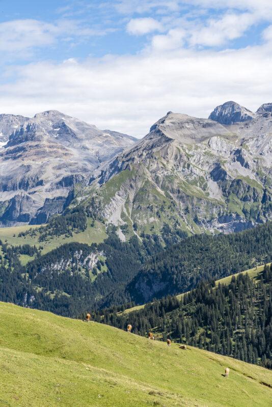 Lenk Betelberg Panorama