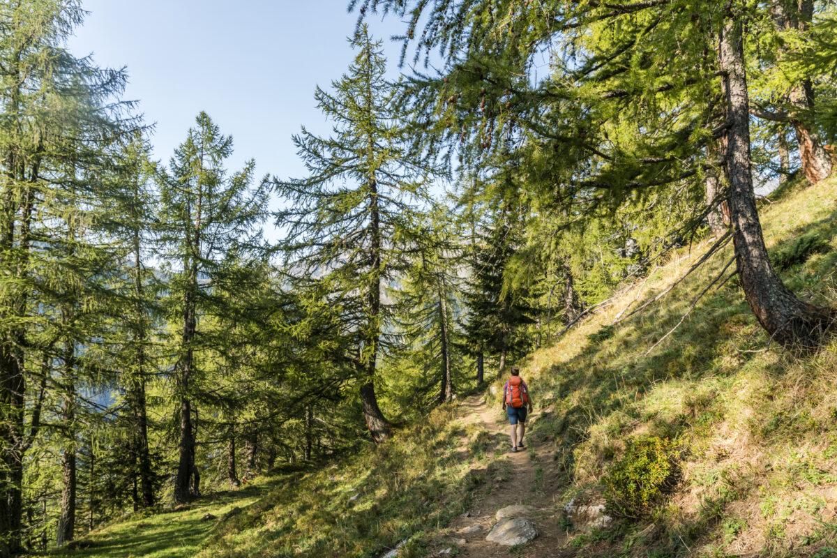 Blumenweg Alpe Ciamporino Alpe Veglia