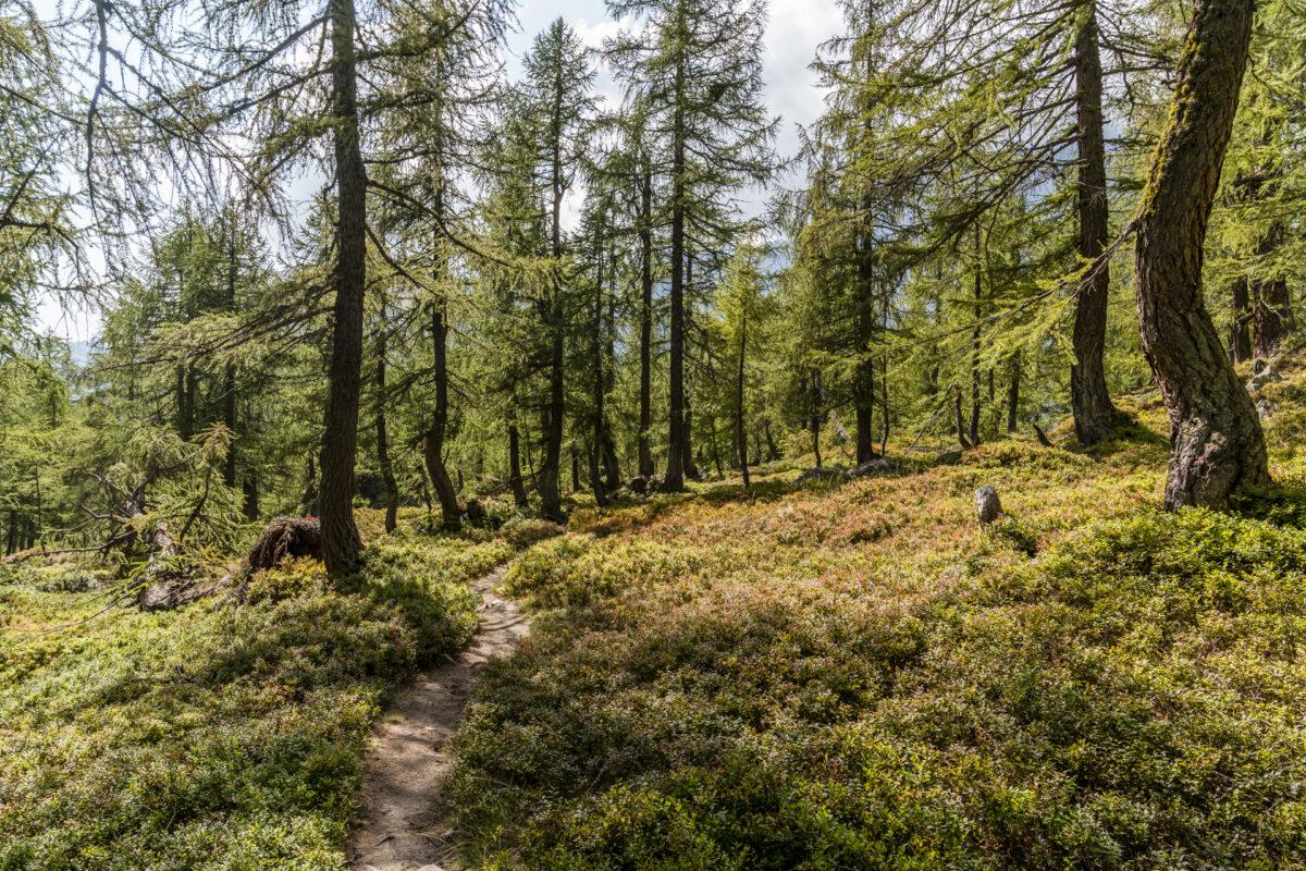 Wanderwege Alpe Veglia