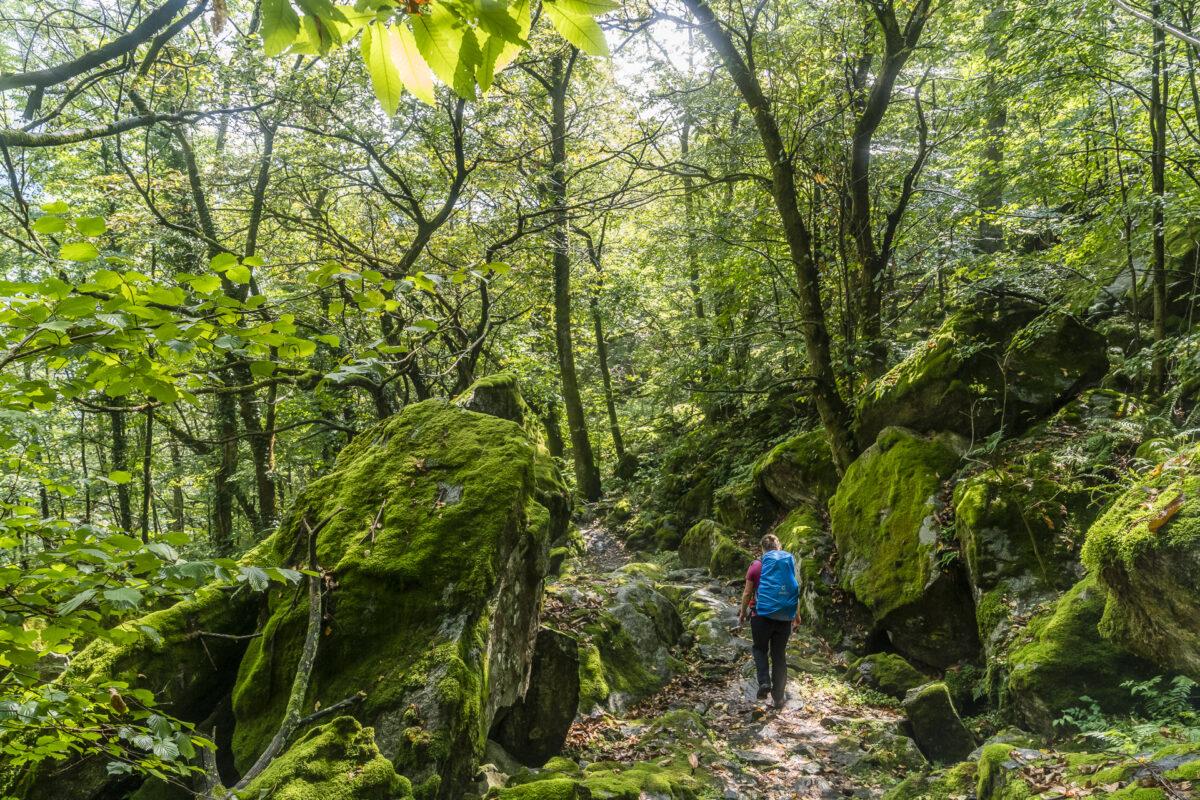Wälder im Val Bavona