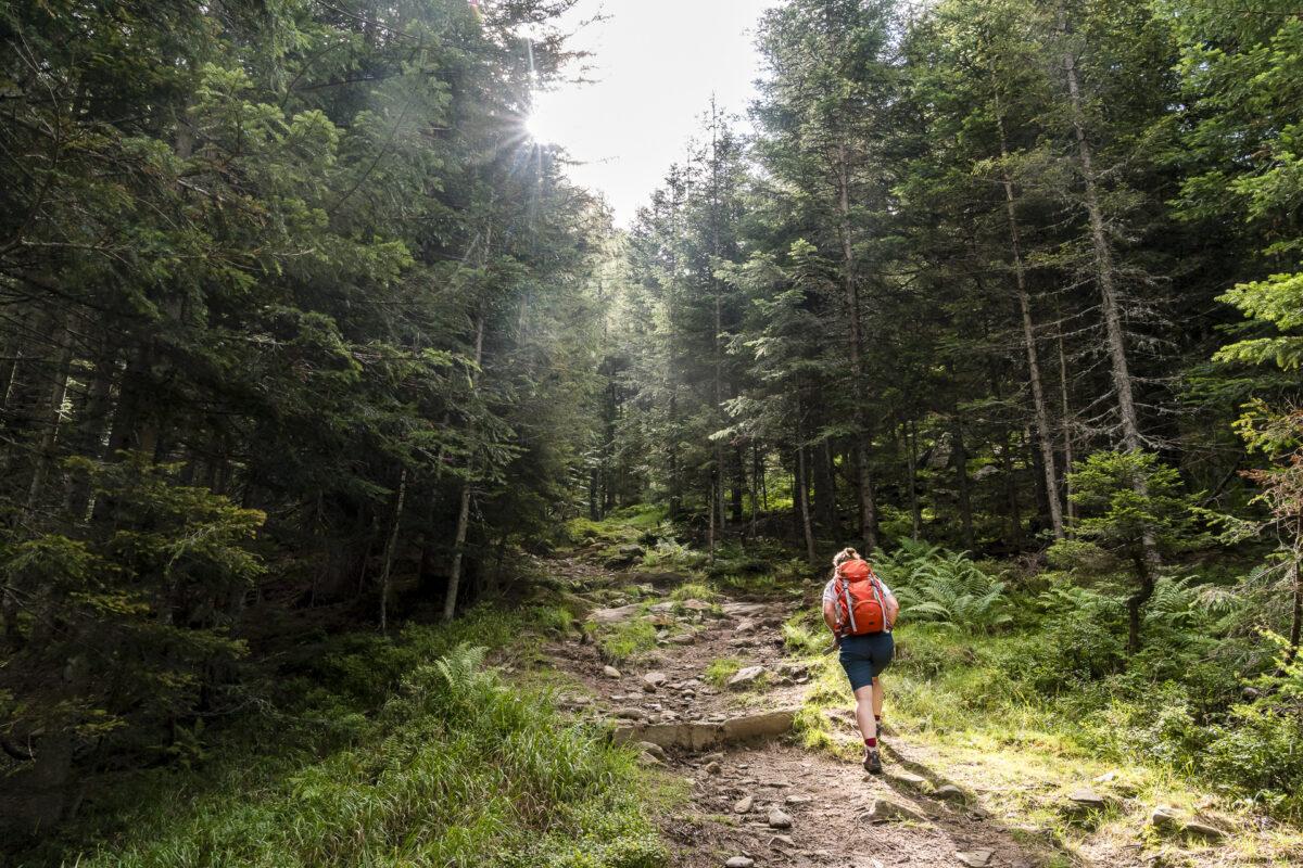 Wanderung Cimalomotto Alpe di Sfii