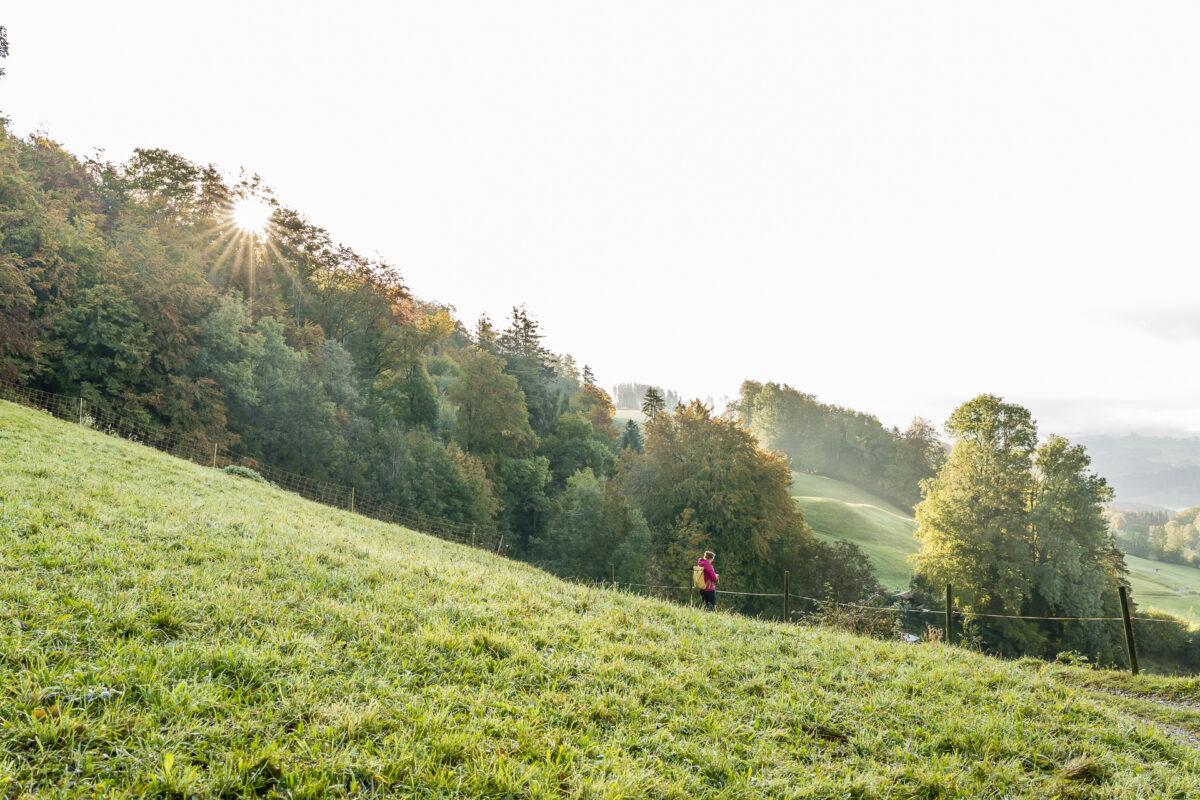 Wanderung Albishorn Sihlwald