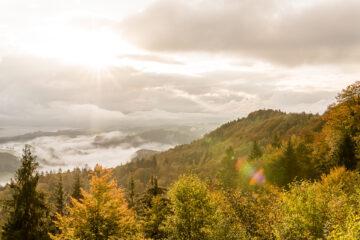 Sihlwald - Albishorn - Türlersee: wo Zürich im Herbst am schönsten ist
