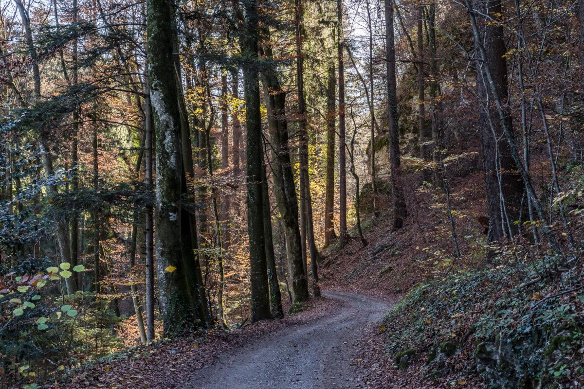 Schlossweg bei Azmoos