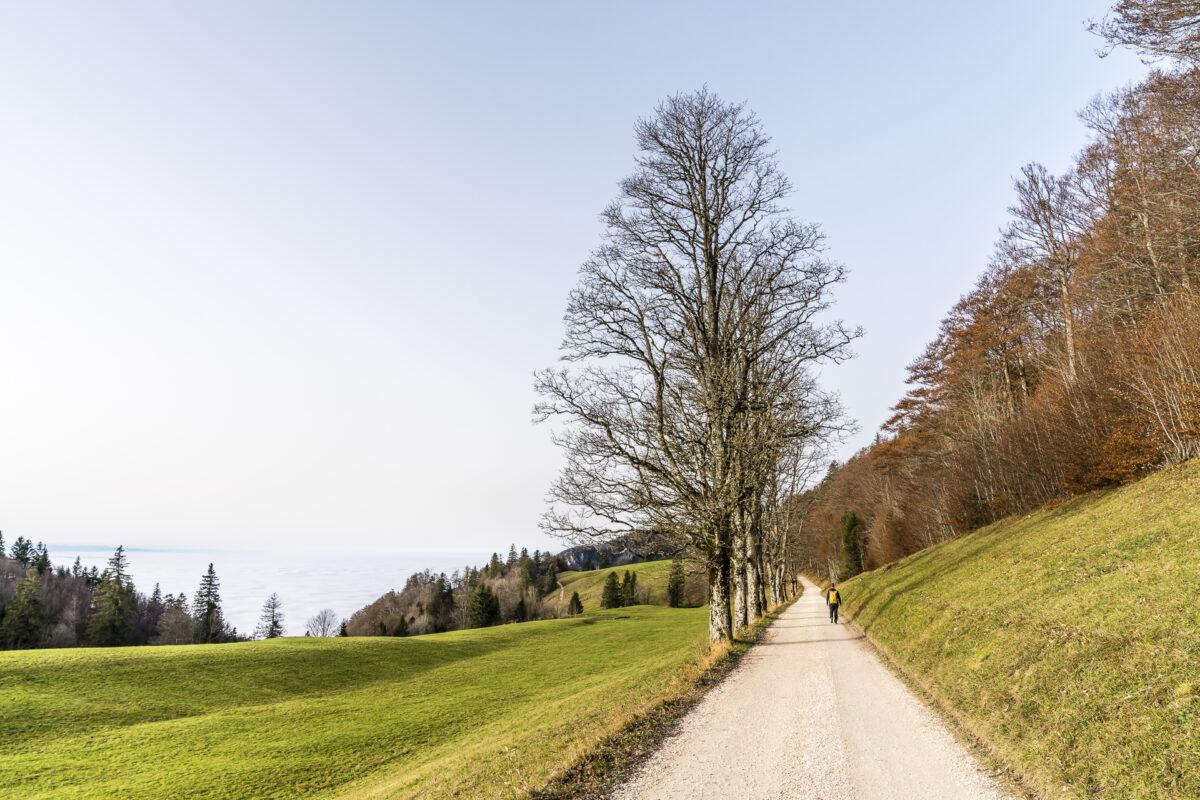 Wanderung Weissenstein Frinvillier