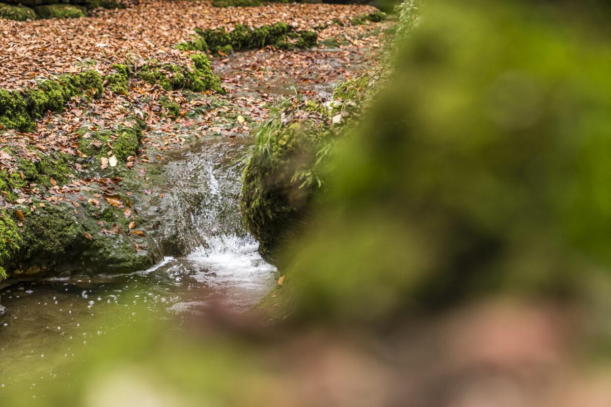 Verenaschlucht Wasser
