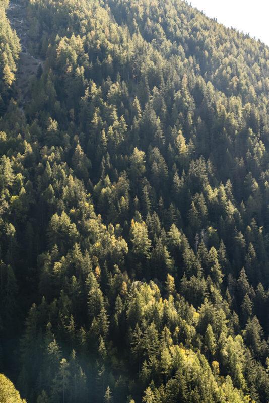 Puschlav Herbstwald