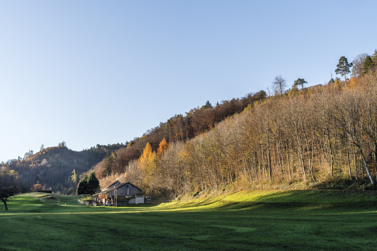Schlossweg Landschaft