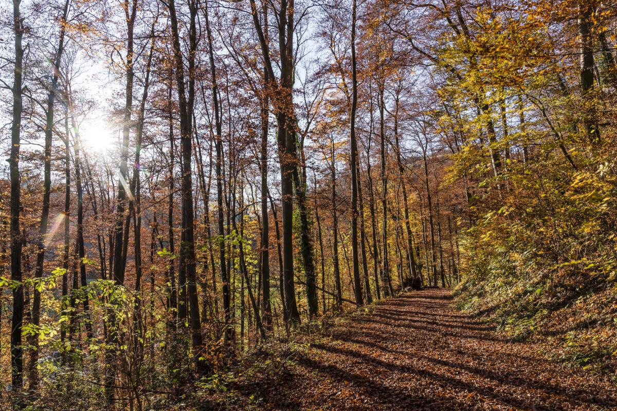 Rheintal Herbstwald