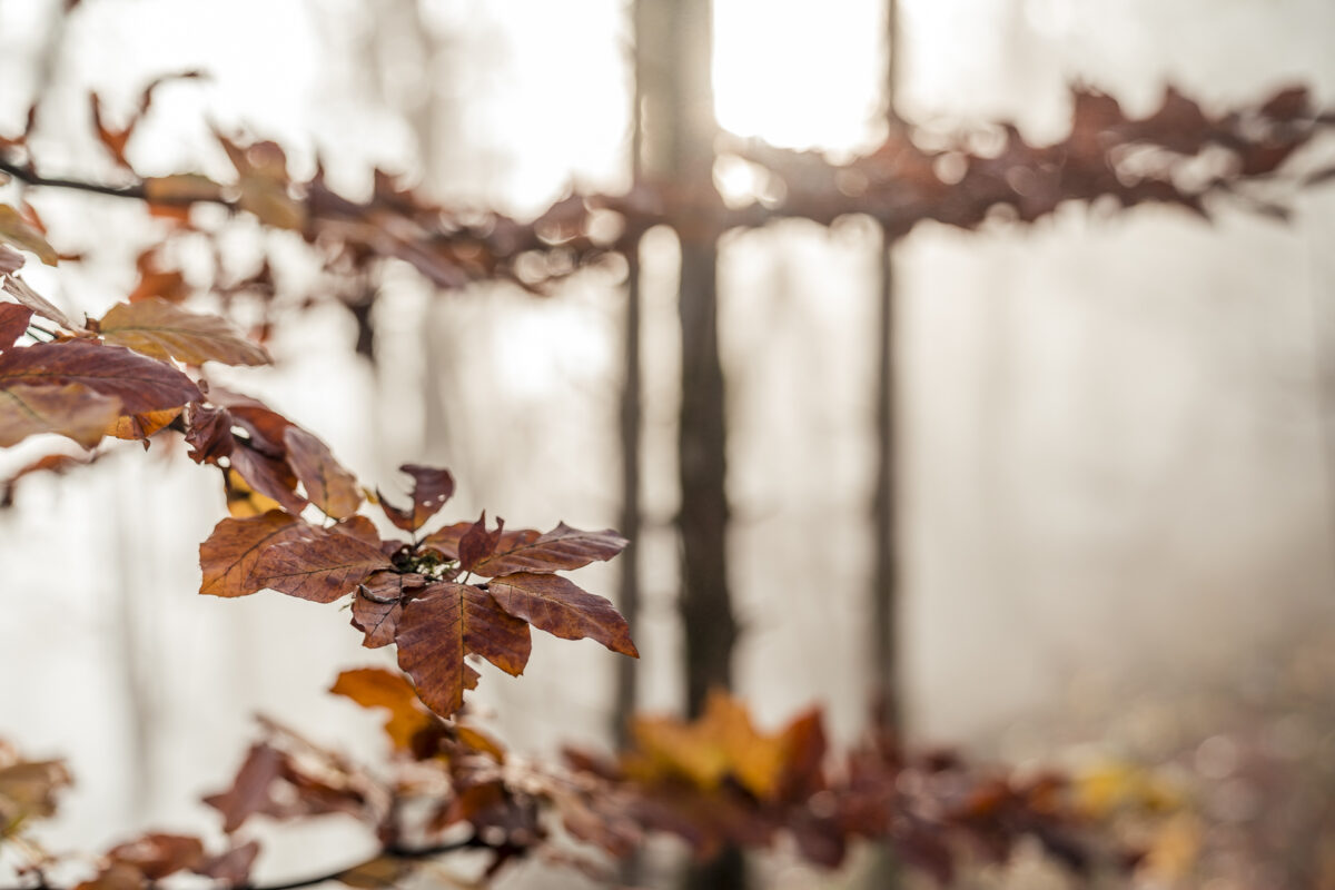 Farbige Blätter Herbst