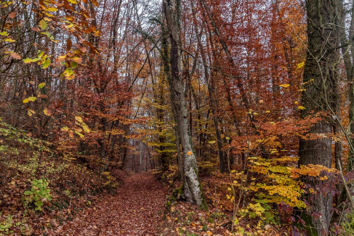 Reiat Schaffhauserland Herbst