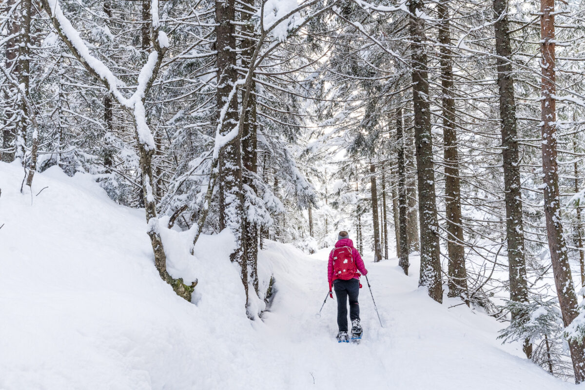 Arnisee Trail Wald