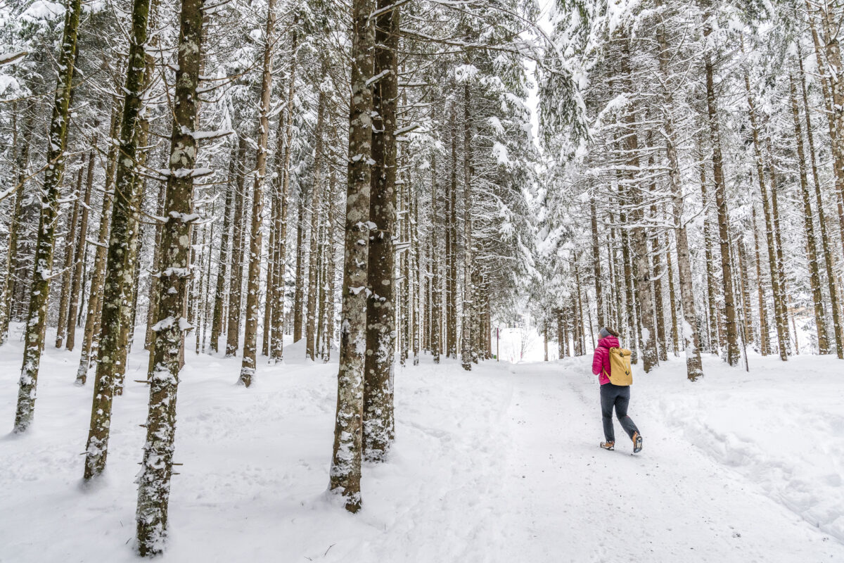 Winterwald Engelberg