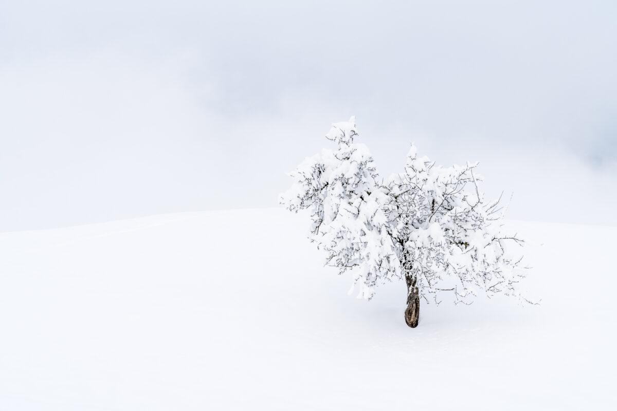 Winterlandschaft Sattel Hochstuckli