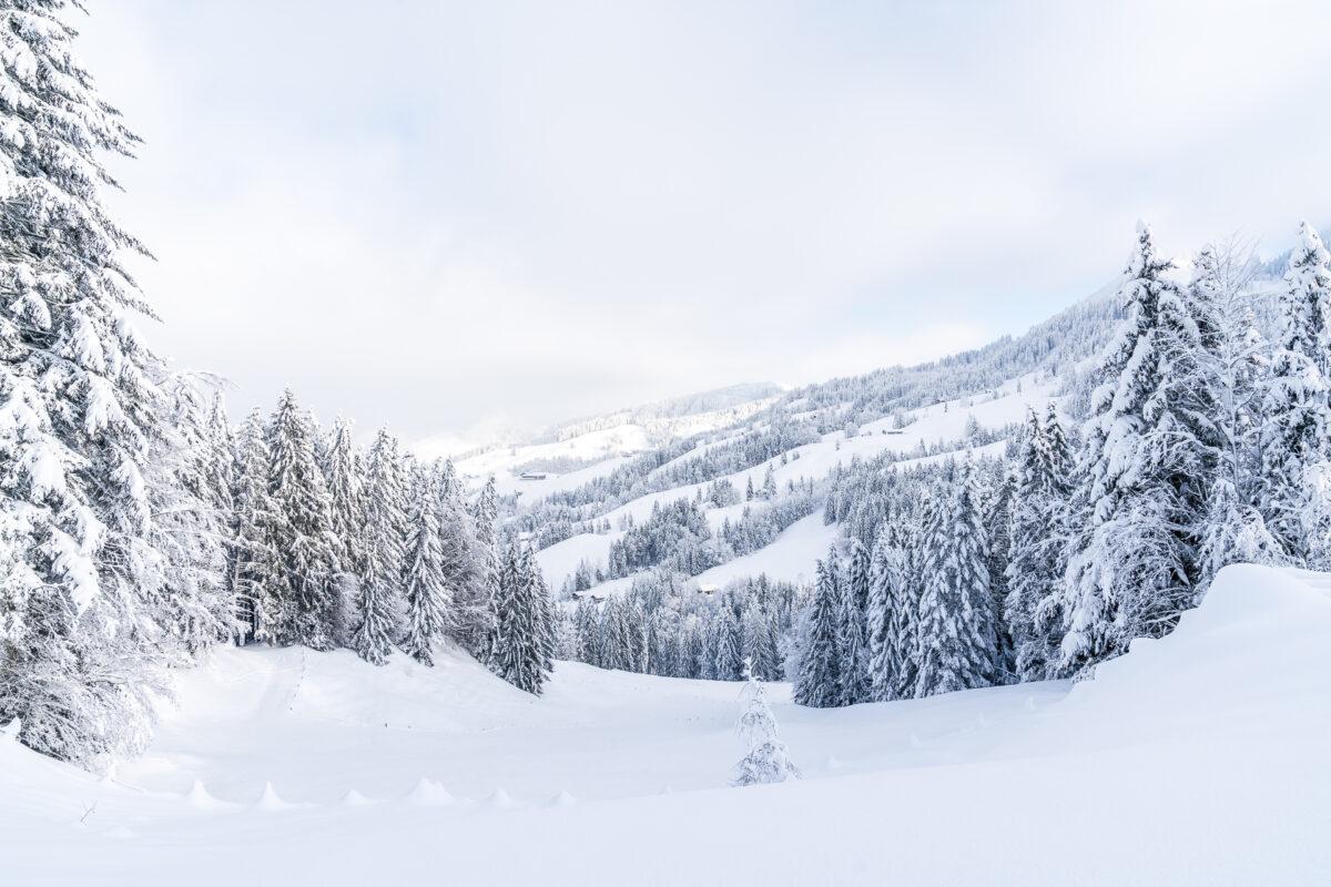 Biberegg im Winter