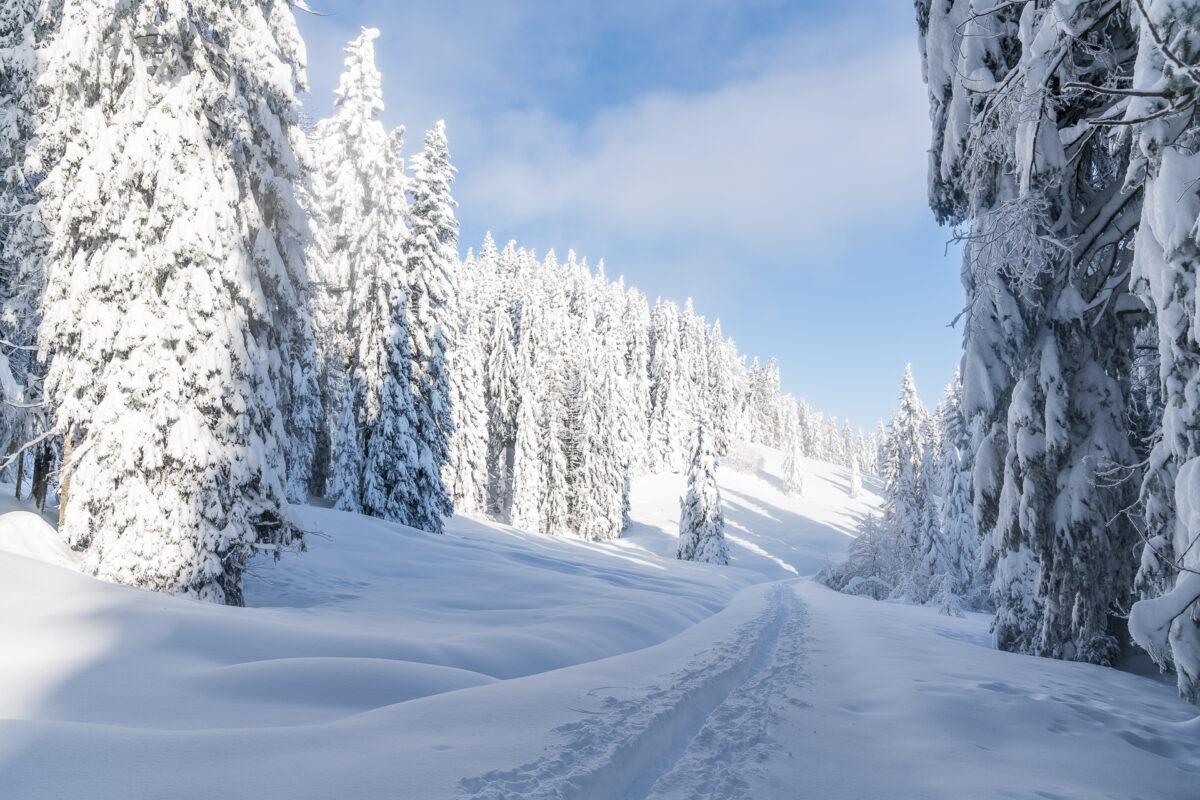 Schneeschuhtrail Schwyz Sattel