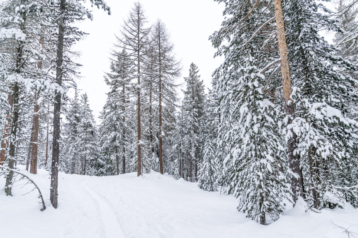 Stazerwald Engadin im Winter