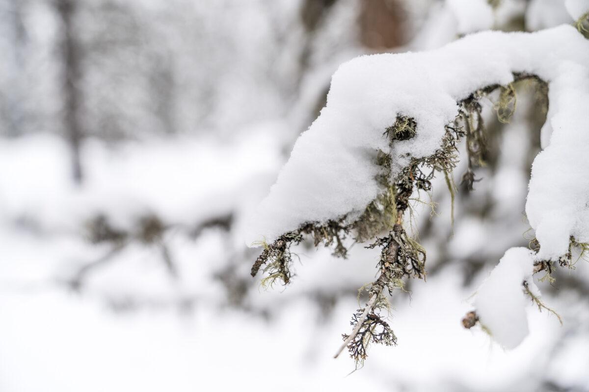 Flechten Schnee