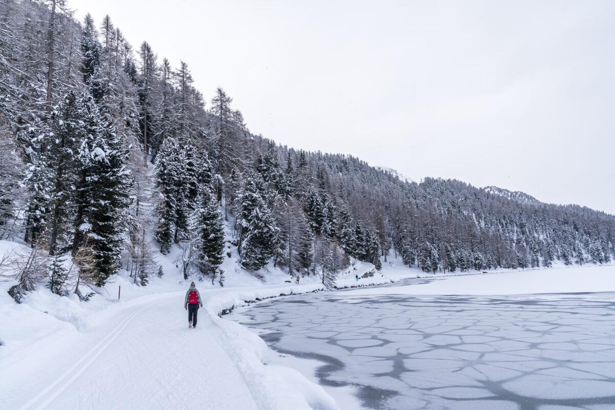 Surlej - Sils Maria Winterwanderweg