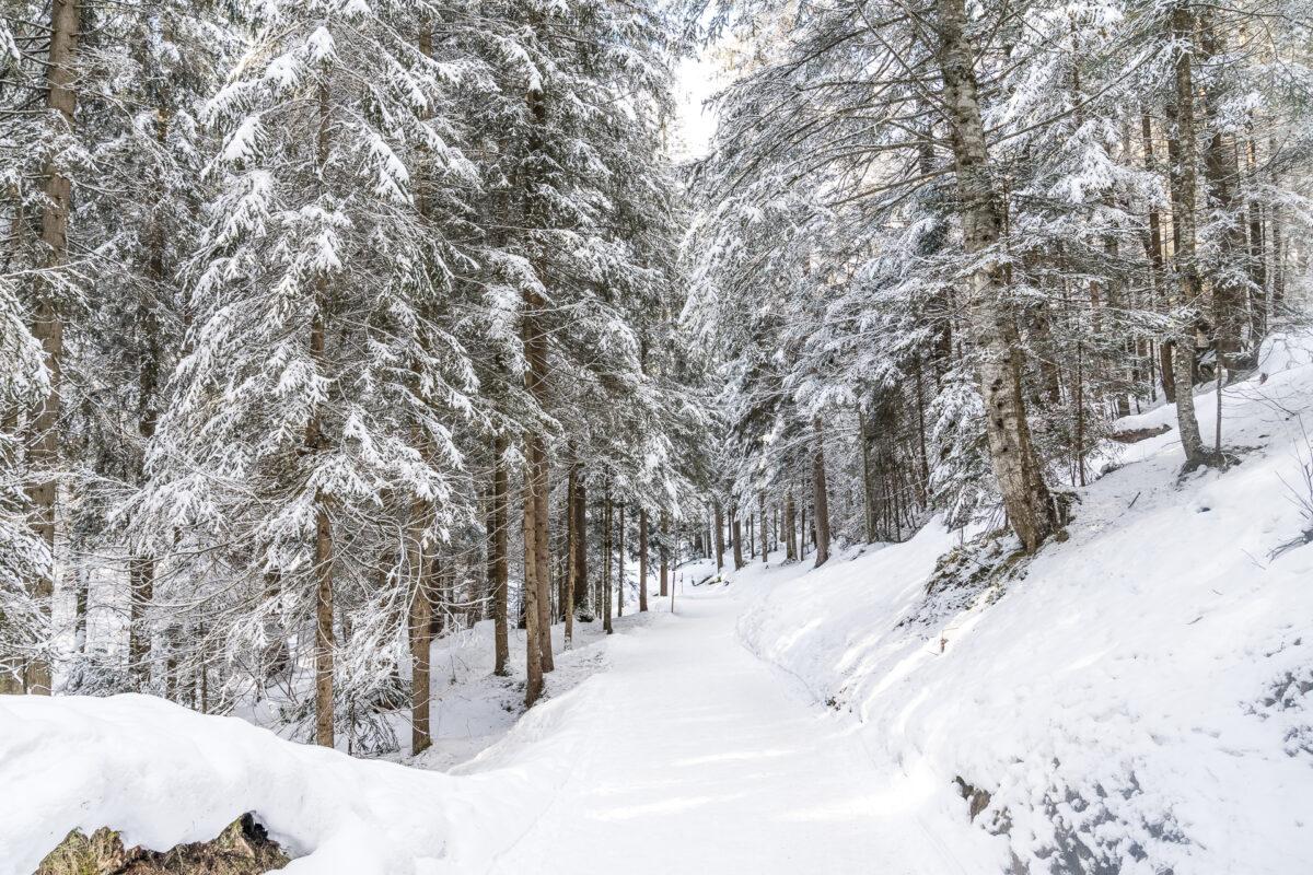 Winterwanderung Flimserwald