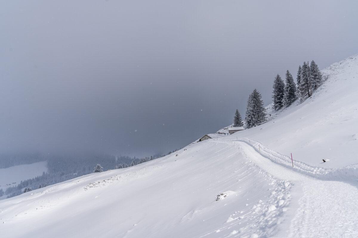 Aufstieg Chammhalden Schwägalp