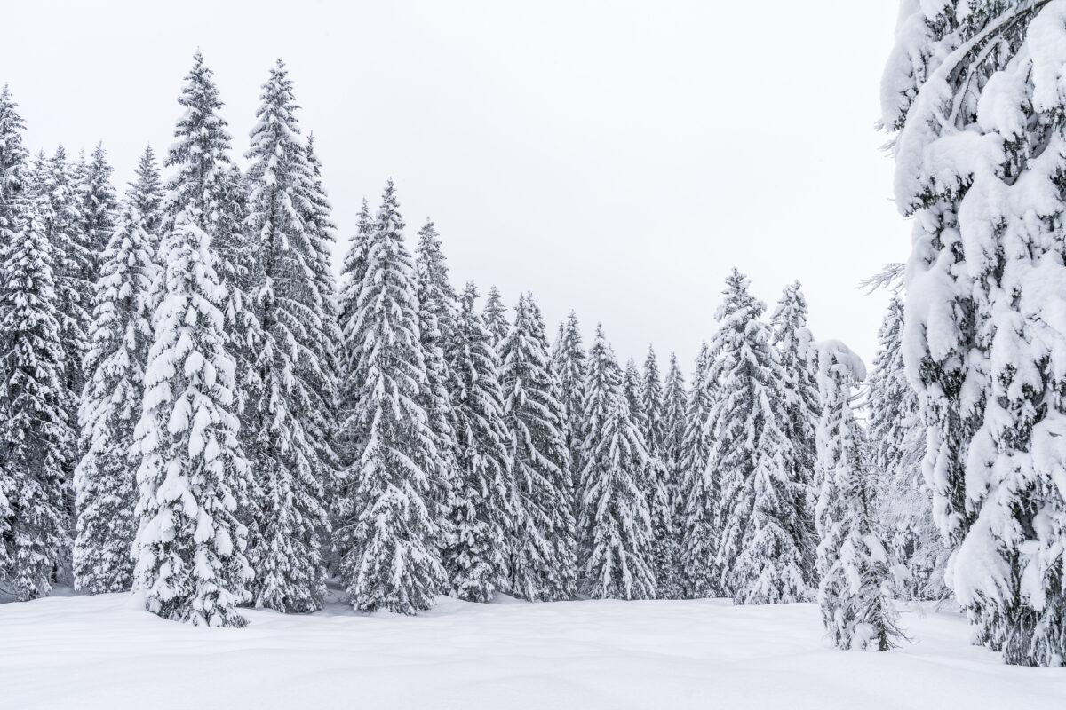 Tannen Appenzell Winter