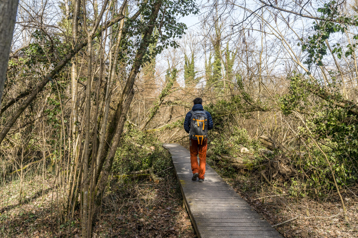 Boardwalks in den Thurauen