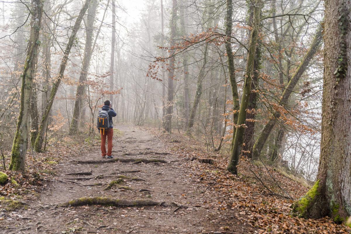 Rheinau Wanderung