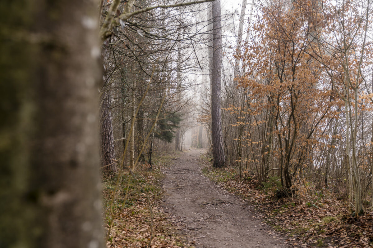 Wanderung Rheinau Ellikon