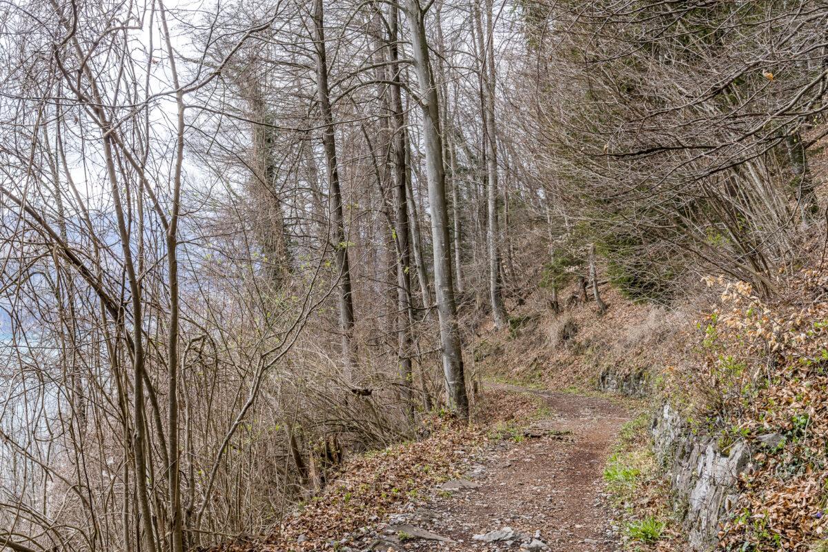 Seerenwald