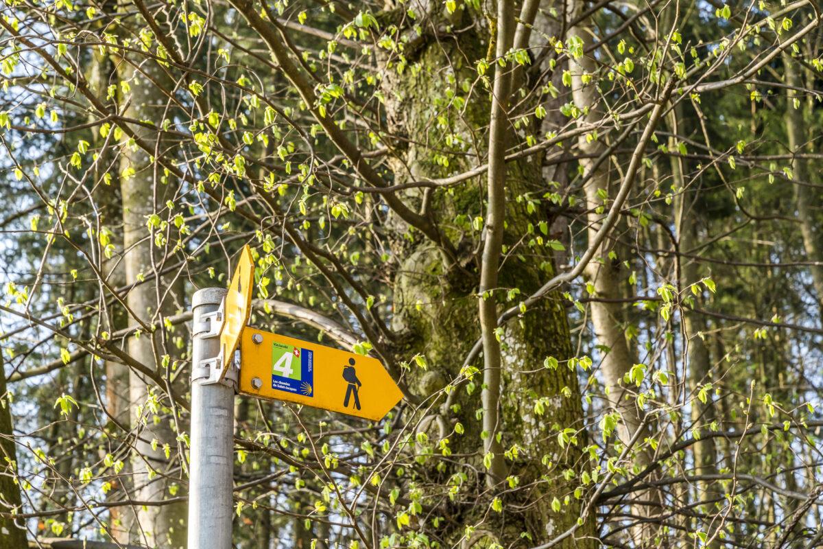 Jakobsweg Fribourg Romont
