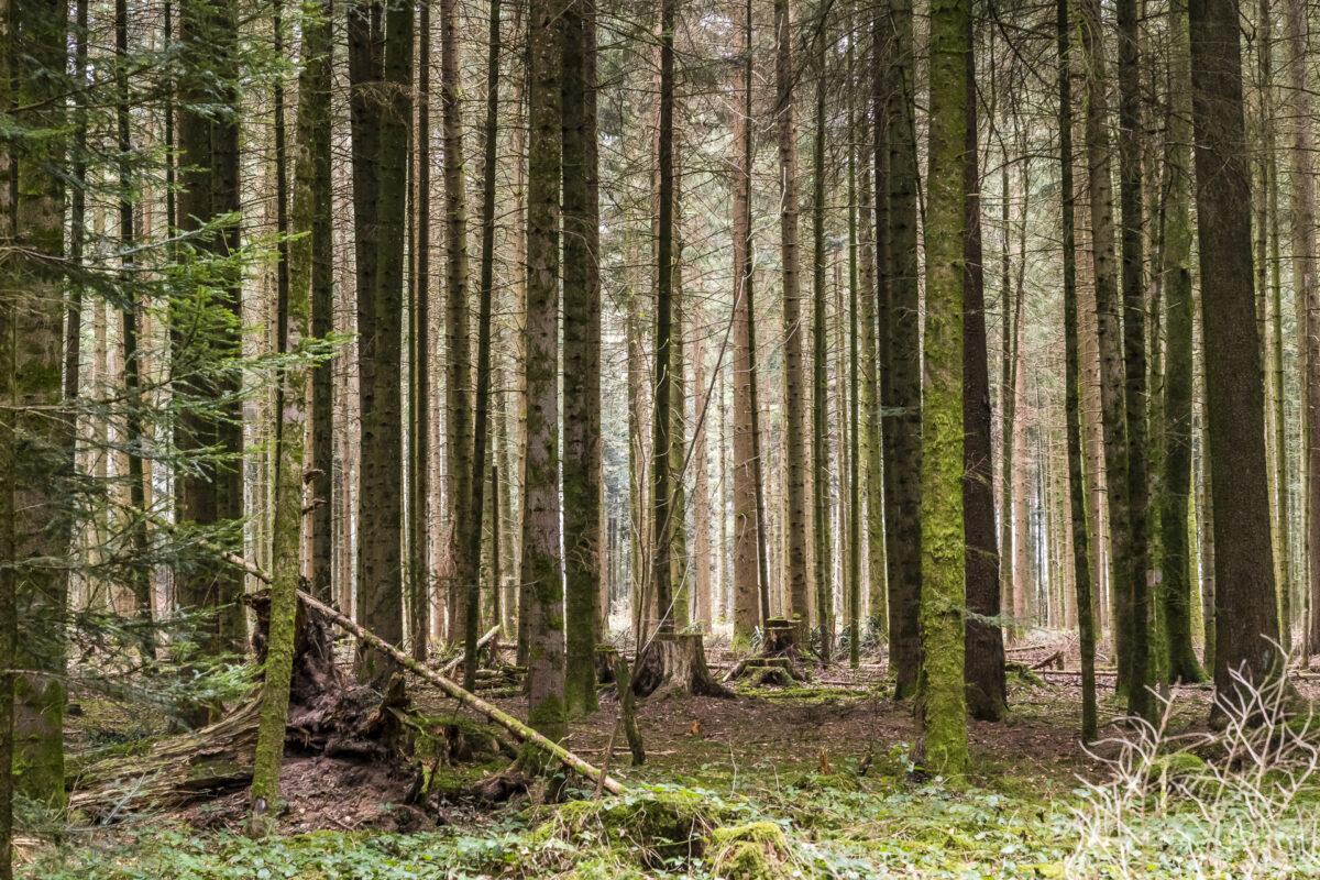 Jakobsweg Wald