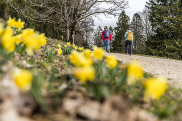 Chemin du Mont Sujet: Blütenpracht im Jura