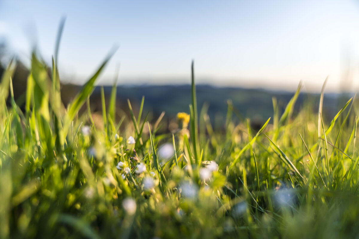 Detailaufnahme Frühlingswiese