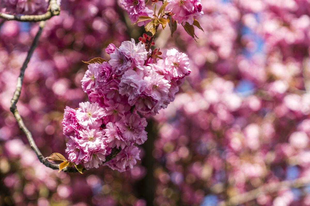 Blütezeit Frühling