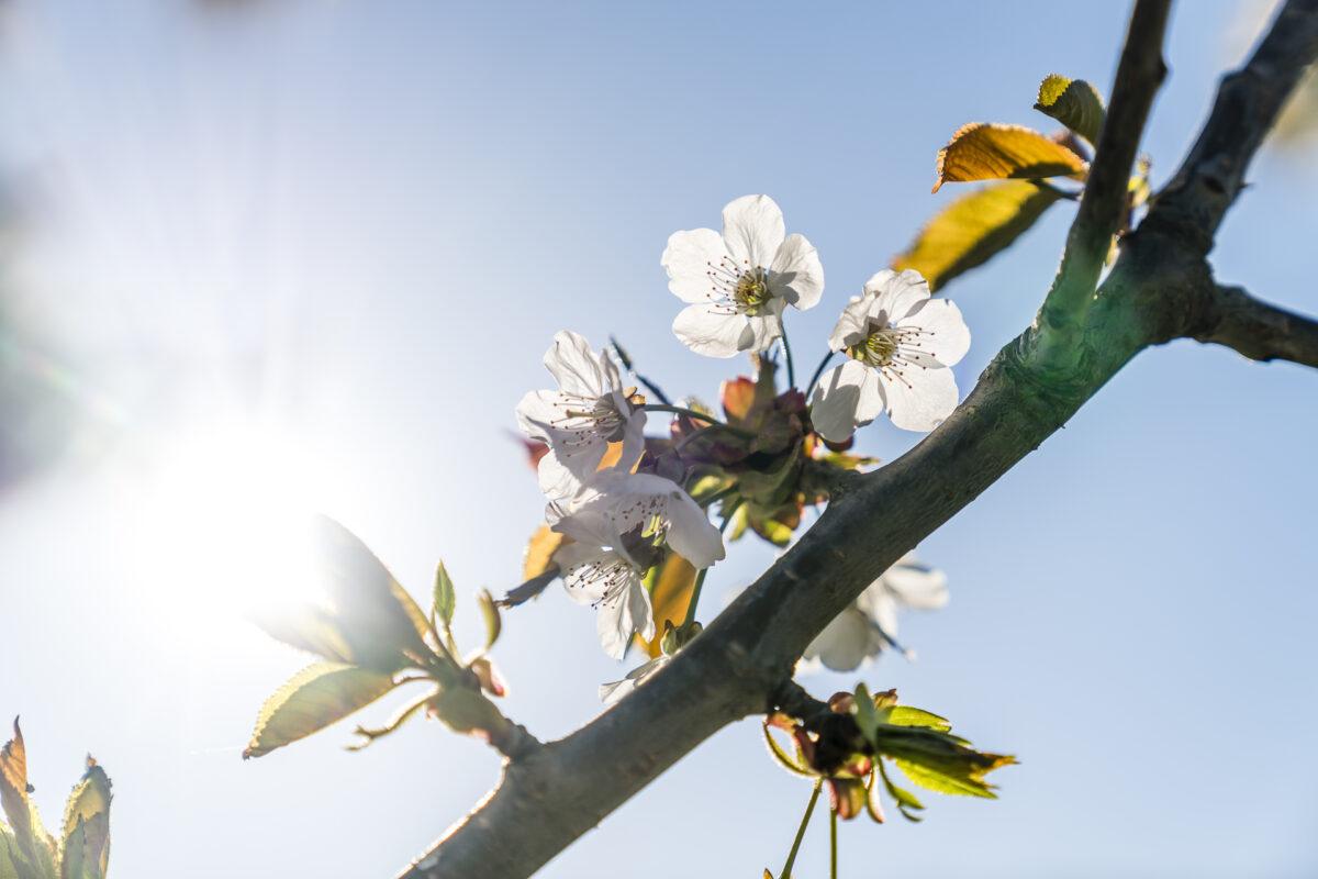 Frühling Blütezeit
