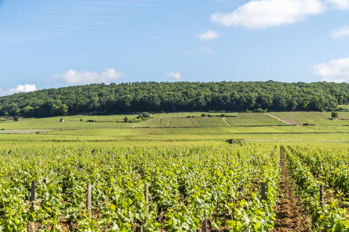 Weinstrasse Grands Crus Burgund