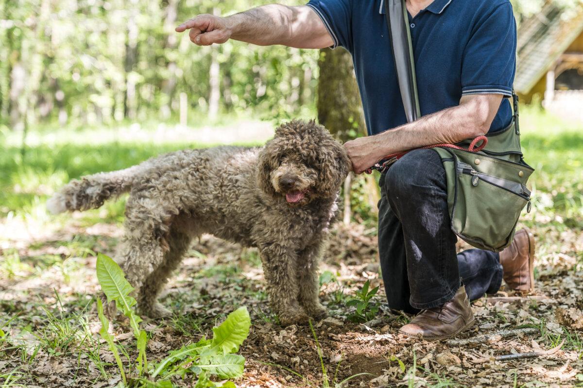 Trüffelsuche mit Hund