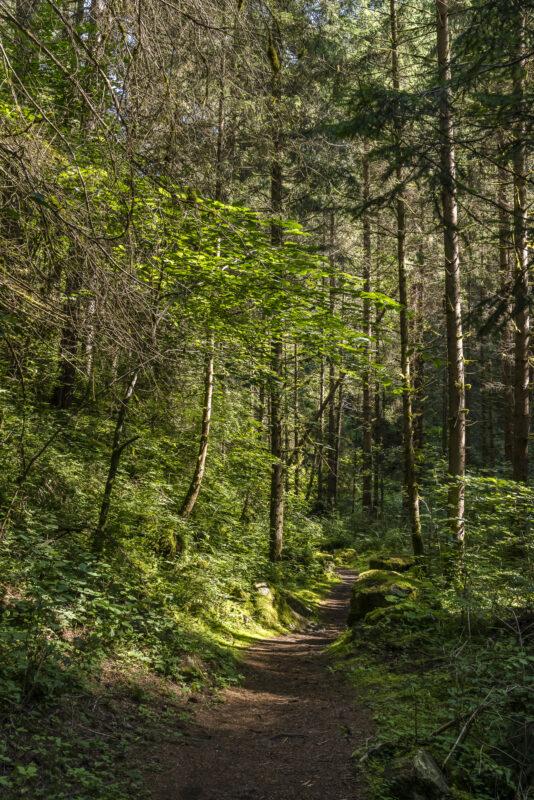 Luis-Trenker-Steig Imst Wanderung