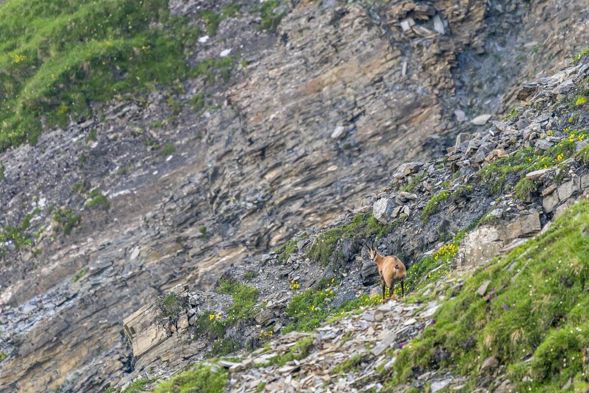 Mont de la Fouly Wild