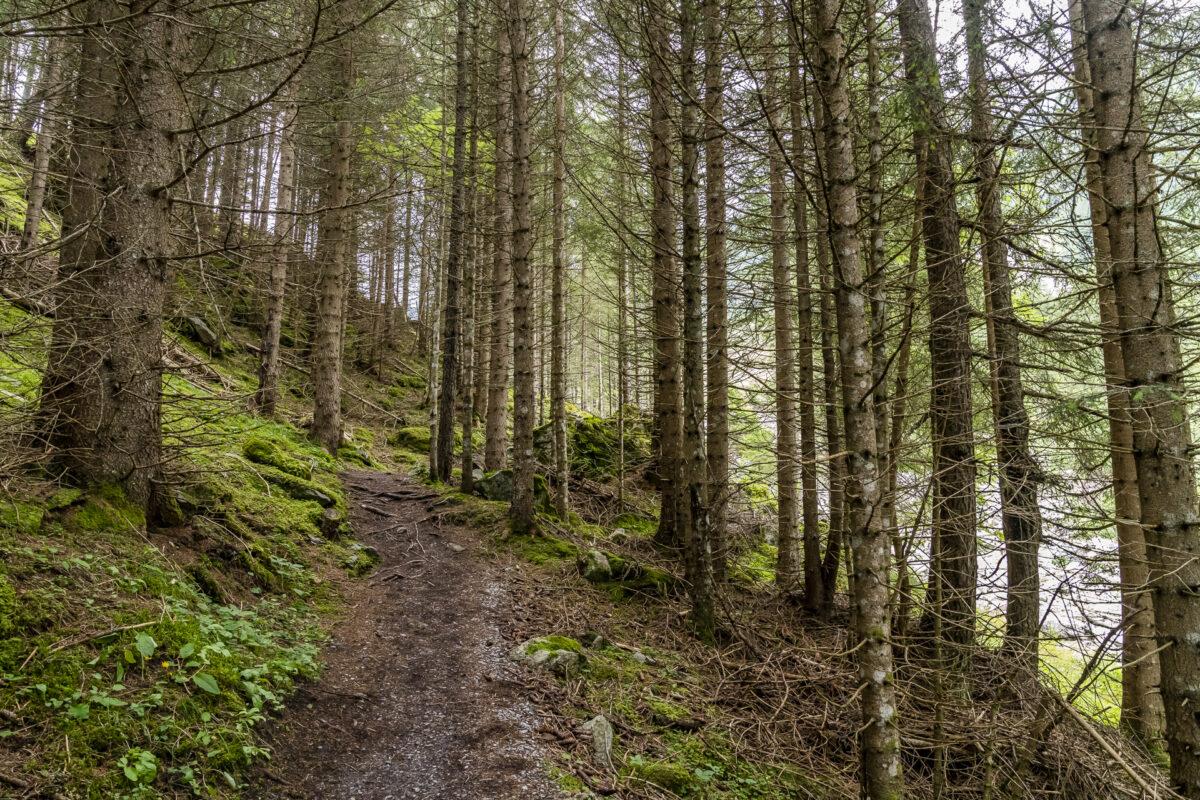 Gasterntal Wald