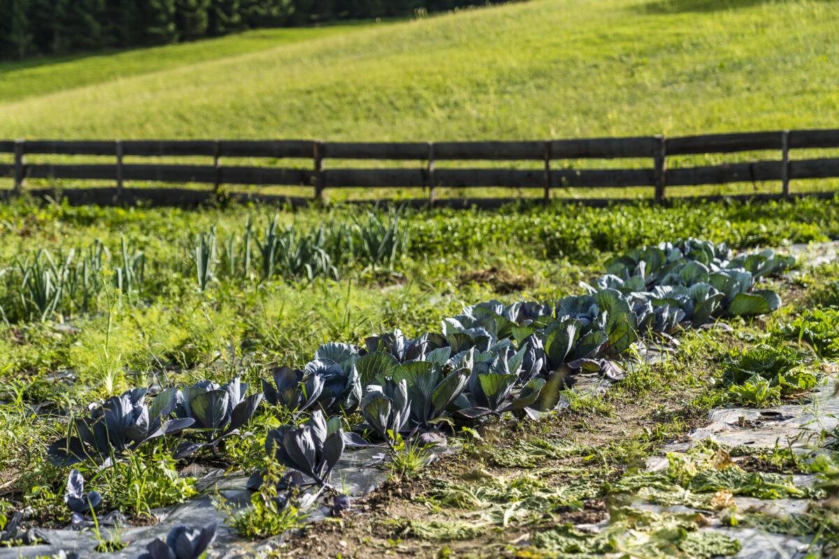 Lindhof Thiersee Gemüseanbau